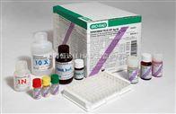 人细胞凋亡抑制因子(IAP )