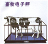 SCS动物电子秤,称猪电子秤,称牛电子秤,畜牧秤