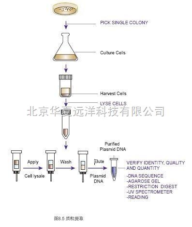 使用专业试剂盒抽提质粒去除内毒素;3)