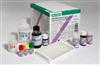人細胞凋亡抑制因子(IAP )