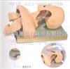 KAH-50气管插管模型|气管插管训练模型|高级人体气管插管训练模型
