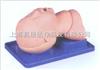 KAH-1O气管插管模型|气管插管训练模型|婴儿气管插管模型