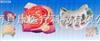 SMO038肾单位肾小球及足细胞