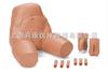 375-21001女性骨盆-可互换导尿与灌肠模型