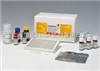 大鼠L-LDH试剂盒96人份/48人份大鼠L-鼠乳酸脱氢酶