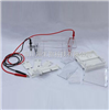 DYCP-31DN型 琼脂糖水平电泳仪(槽)(小号)