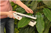 Yaxin-1242Portable Leaf Meter